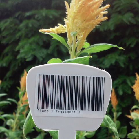 Special features barcode